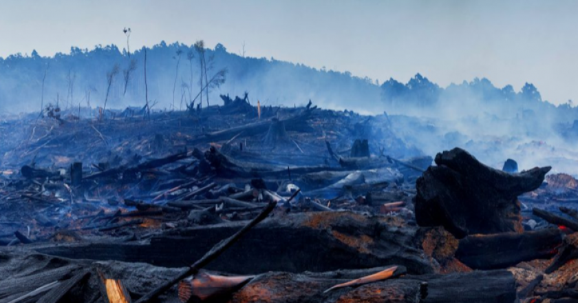 help for trucking businesses after the bushfires
