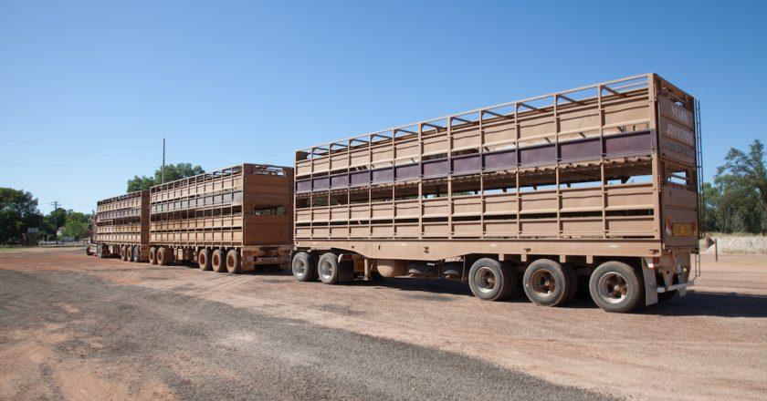 fundamental issues for livestock transport