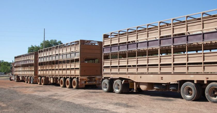 the most dangerous part of the livestock transport task