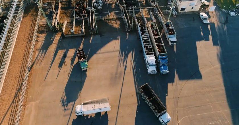 skilling up in livestock transport